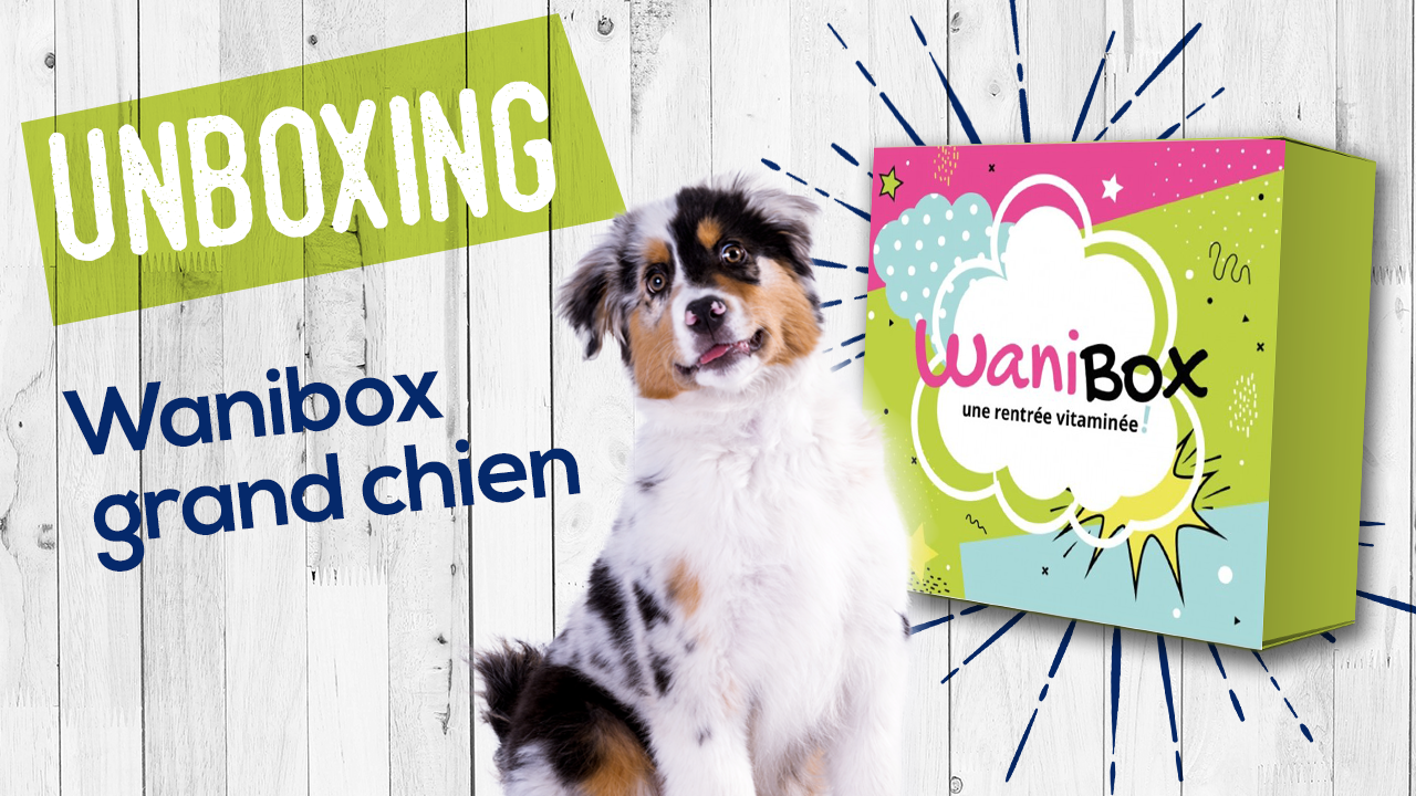 Déballage d'une Wanibox grand chien – unboxing